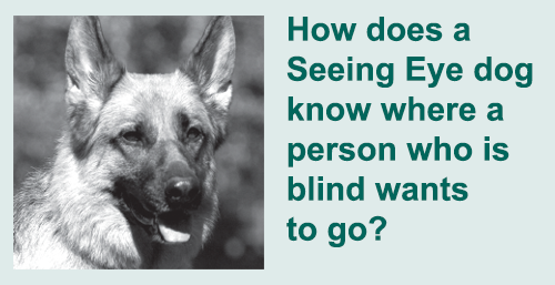 How does a Seeing Eye dog know where a person who is blind wants to go?  Photograph of the head of a german shepherd.